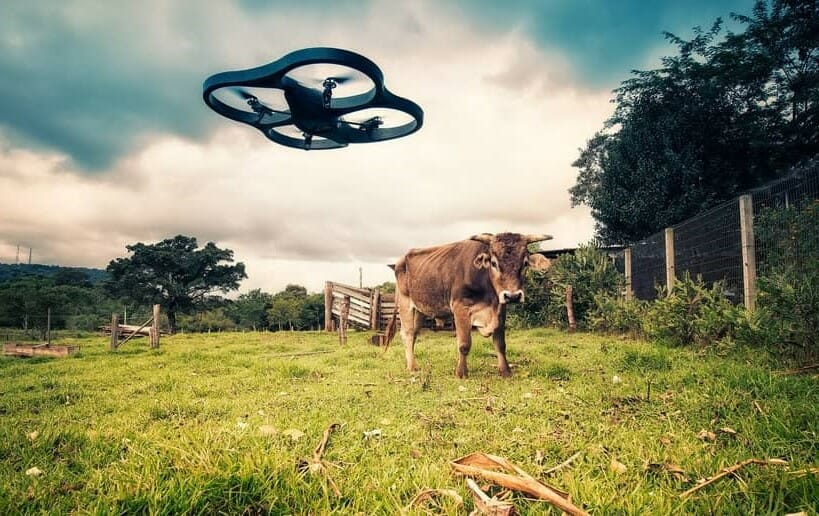 best drones for checking cattle