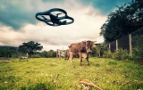 Best Drones For Checking Cattle [Top 3 To Buy In 2021]